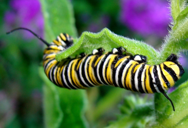 caterpillar for website